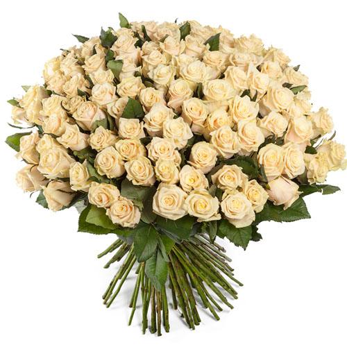 101 кремова троянда фото букета