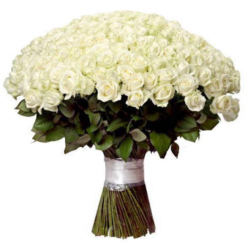 фото 201 біла троянда