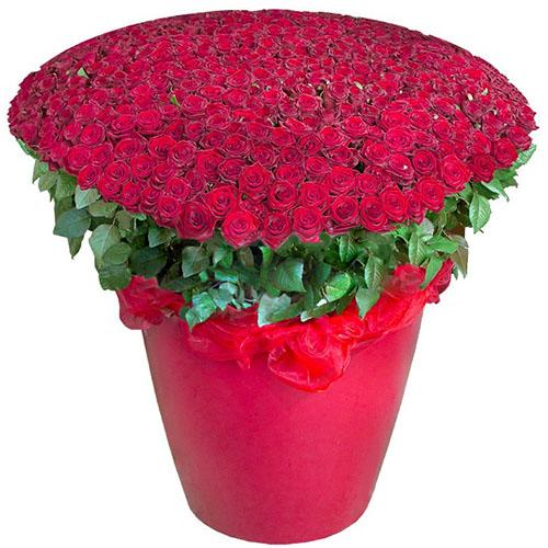 товар 301 червона троянда у великому вазоні