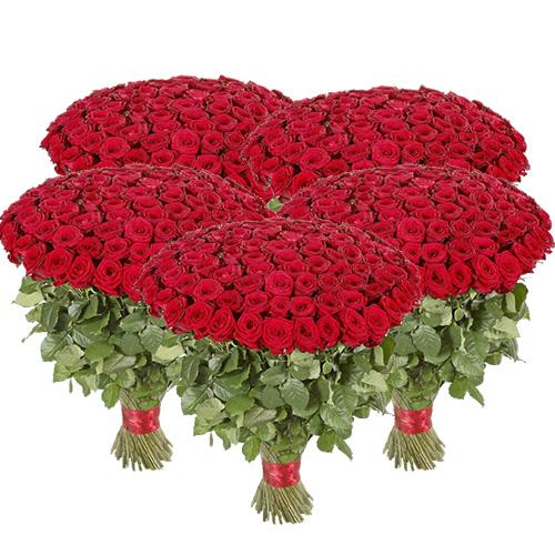 картинка 501 червона троянда